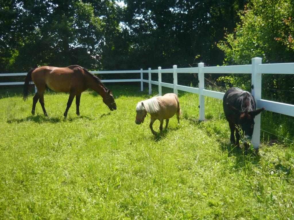 obrazek konie na farmie za https://ogrodzeniaplastikowe.pl/galeria-ogrodzen-farmerskich/